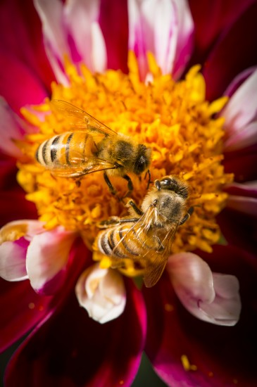 Bee with flower image