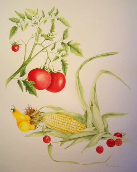 Botanical drawing by Holly Fritchman of tomatoes and corn.