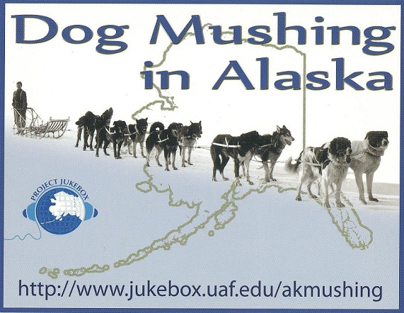 Dog Mushing in Alaska Postcard