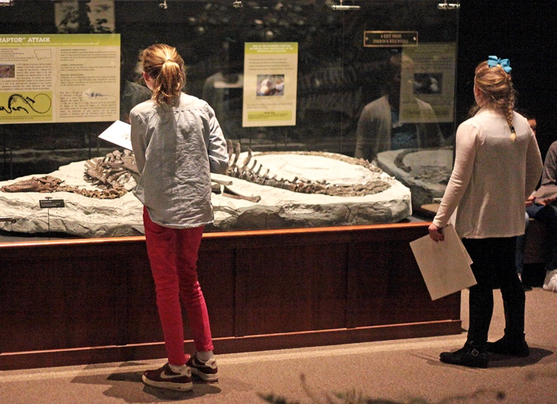 two elementary-age girls look an exhibit of dinosaur bones