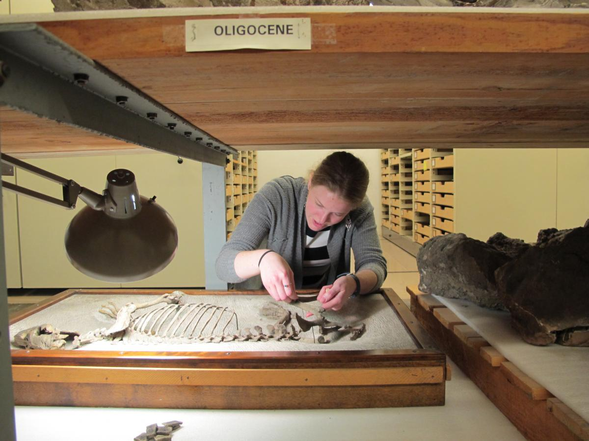 Conservation technician Linsly Church cleans and repairs one of the type specimen which now how a lid with a window to protect the specimen. Methods such as these are improvements to prior storage solutions.