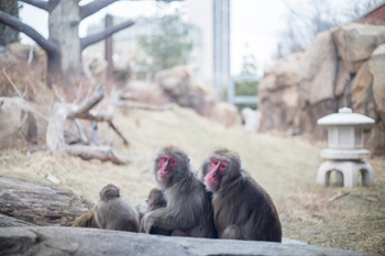 April 2018 Project Profile Three Macaques